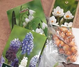 Pflanzanleitung für Blumenzwiebeln