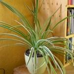 Pflanzen als Luftfilter