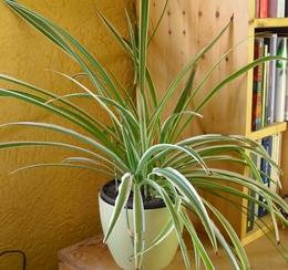 Airy box innovativer pflanzentopf als hochwirksamer luftreiniger nat rliche luftreinigung - Zimmerpflanzen groay ...